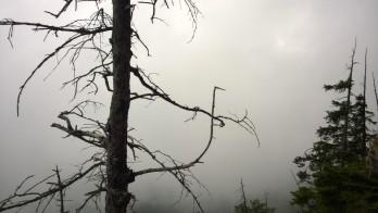 Via Kapf Klettersteig im Nebel